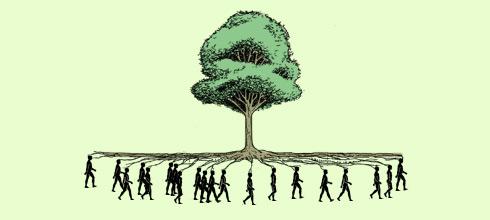 """A nueve años de su sanción, ¿se cumple la llamada """"ley de bosques""""?"""