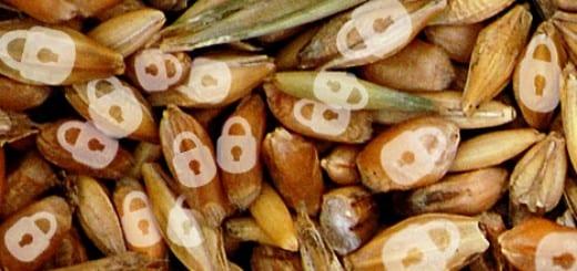 trigo-trabas