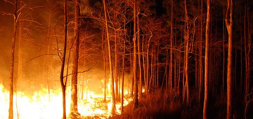 El 70% de los incendios en la Provincia ocurren por causas desconocidas