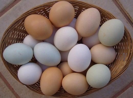 ¿Son más nutritivos los huevos marrones que los blancos?