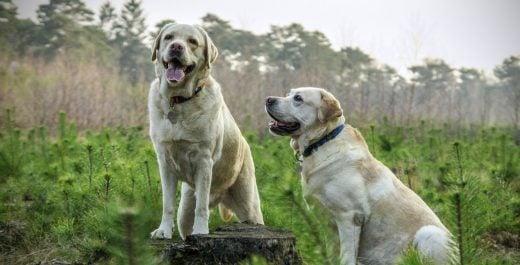 """Es falso que en Inglaterra musulmanes envenenan perros y piden que sean prohibidos """"por respeto al islam"""""""