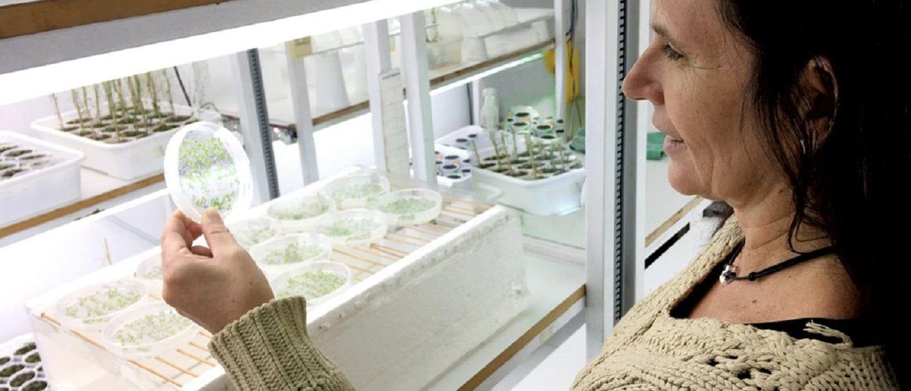 Inversión en Ciencia: cayó durante la gestión de Cambiemos