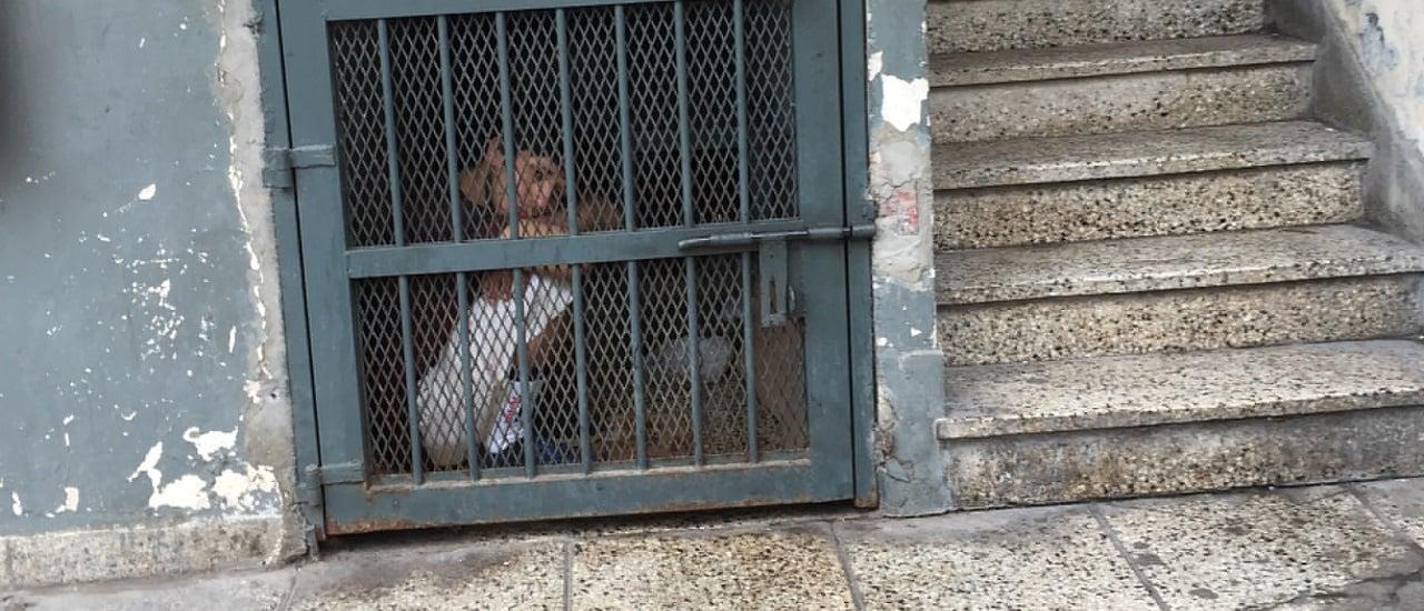 No hay datos para respaldar los dichos de la jueza de Quilmes que se refirió a liberados por delitos graves