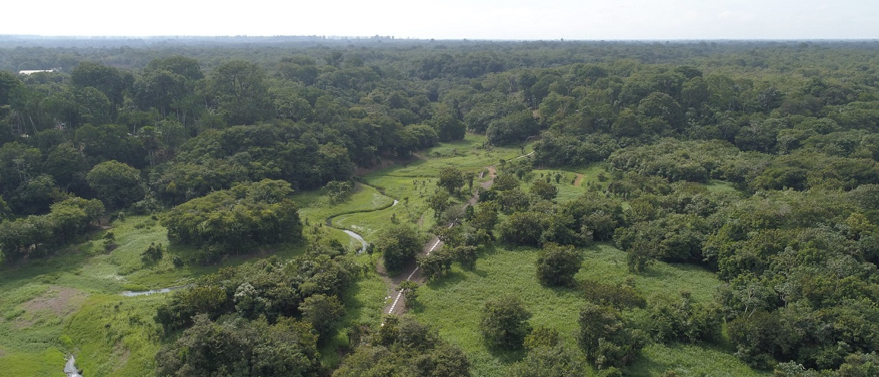Los incendios en el Amazonas son destructivos, pero no están agotando el suministro de oxígeno