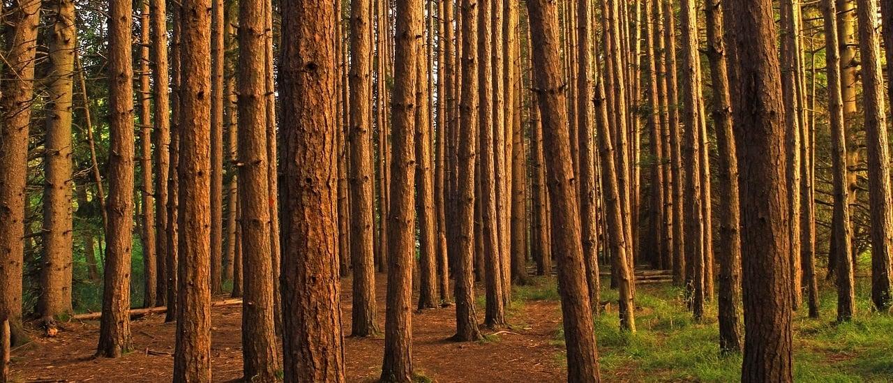 Forestación en la Argentina: cuál es la situación de los bosques nacionales