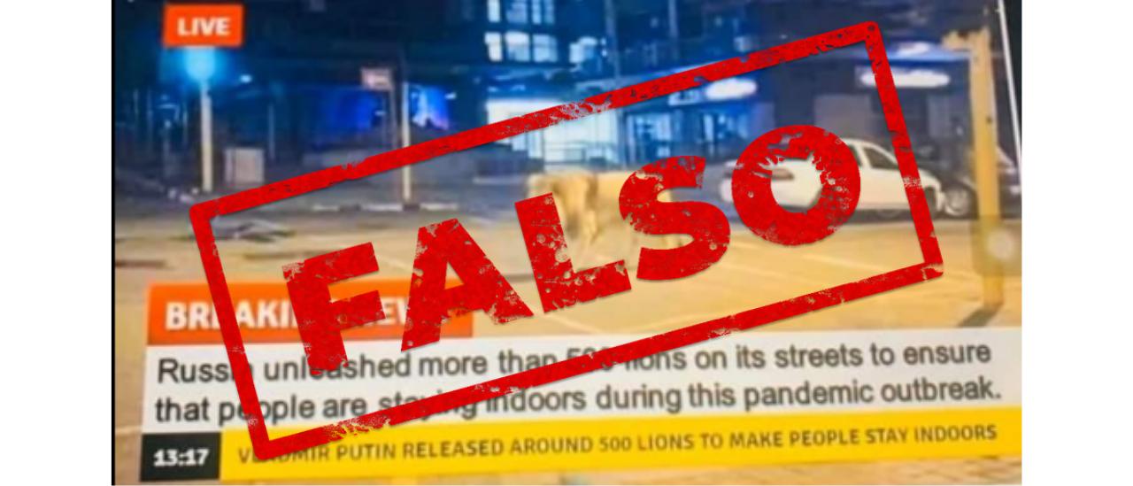 Es falso que el gobierno ruso liberó leones para mantener a la gente en su casa
