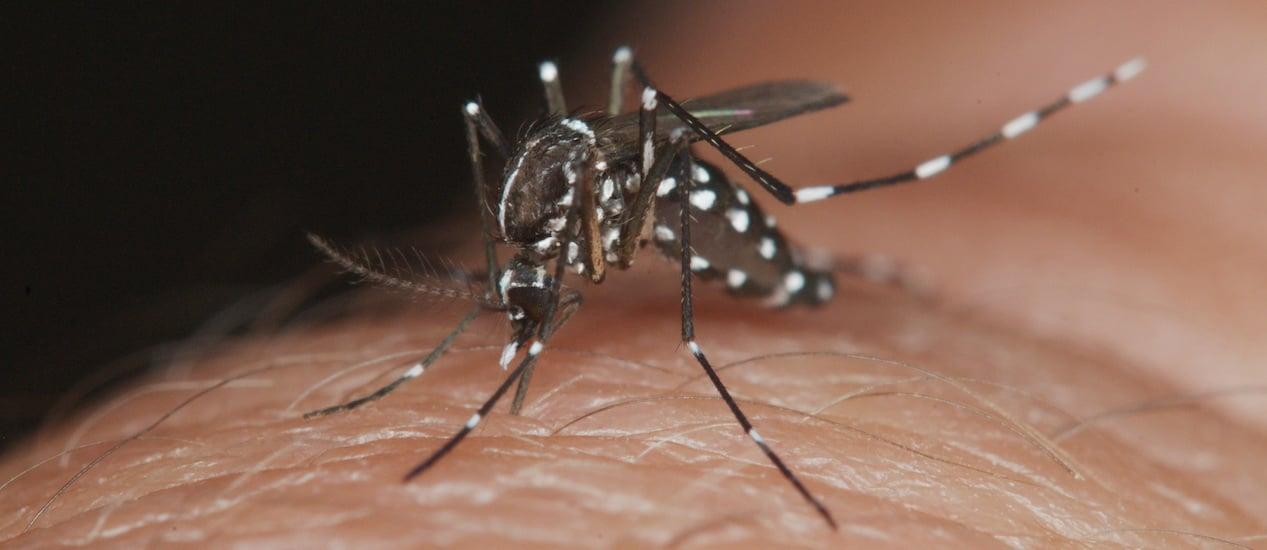 Dengue: mitos y verdades sobre la enfermedad y el mosquito transmisor