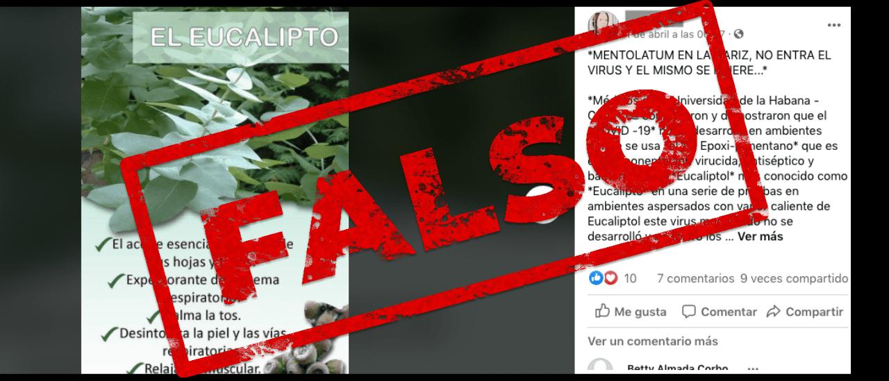 Es falso que el eucalipto previene el contagio de la COVID-19