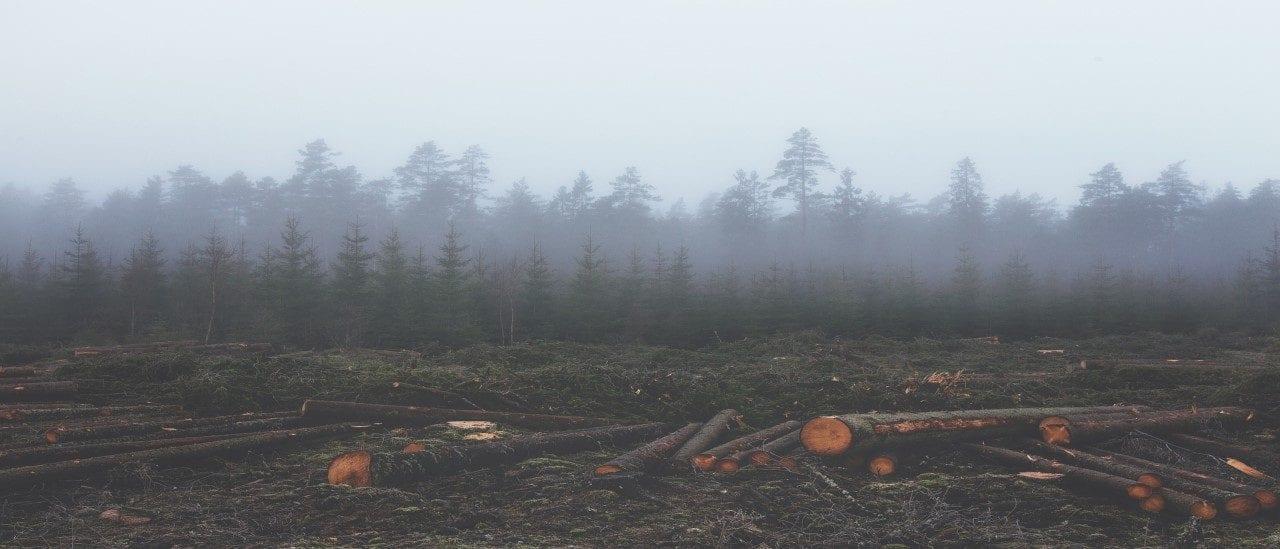 La degradación del ambiente puede promover epidemias