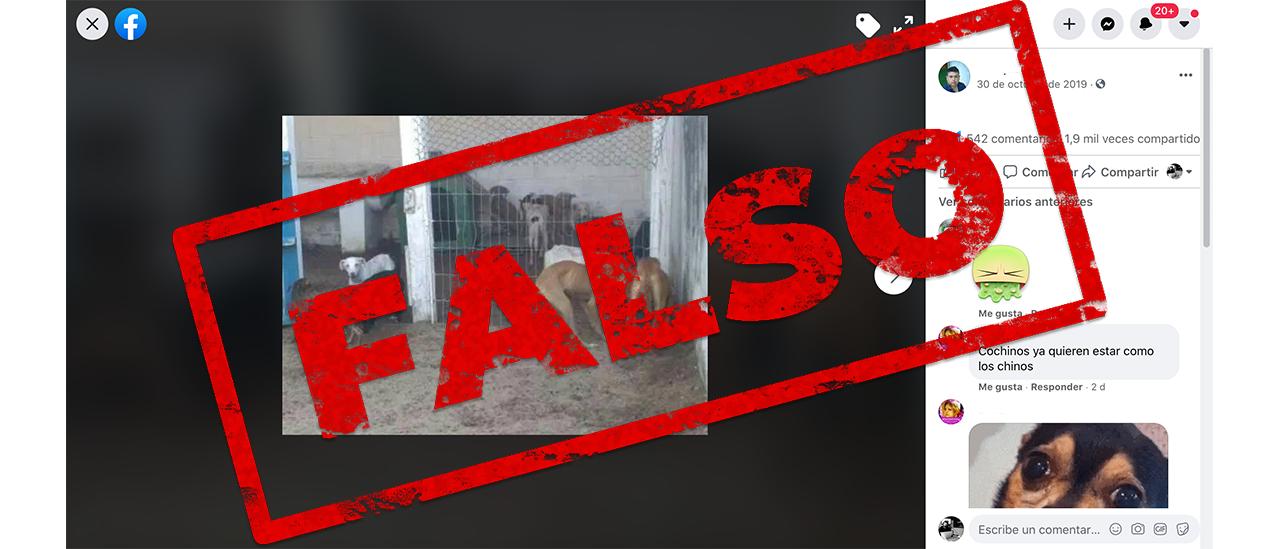 Es falso que en Tucumán estén haciendo chorizos con carne de perro